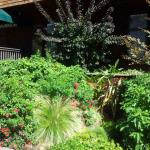 Colorful Plantings in Marin Image 13