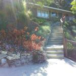 Colorful Plantings in Marin Image 14
