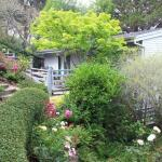 Colorful Plantings in Marin Image 15