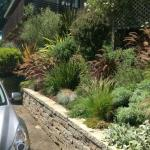 Colorful Plantings in Marin Image 1