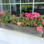 Colorful Plantings in Marin Image 2