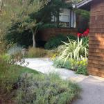 Colorful Plantings in Marin Image 4